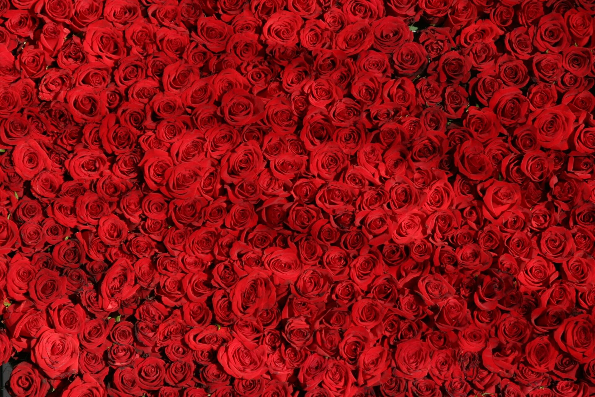 Bed roses